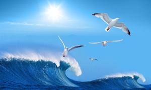 飞翔海鸥与碧蓝大海浪花PSD分层素材
