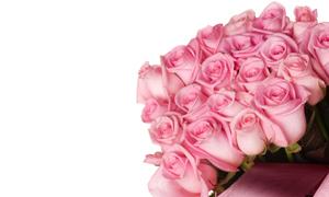 粉色玫瑰花束高清摄影图片