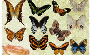 各种漂亮的蝴蝶PNG图片素材