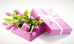 郁金香与礼物包装和高清摄影图片