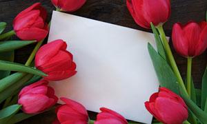 郁金香与空白卡片高清摄影图片