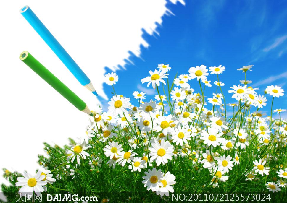 花朵花卉阳光明媚白花绿草大自然铅笔创意蓝天白云云彩云层绿色蓝色