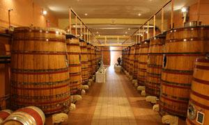 国外酒窖和橡木桶高清图片