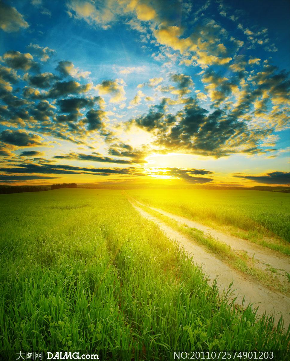 日出草地小路自然风景高清摄影图片