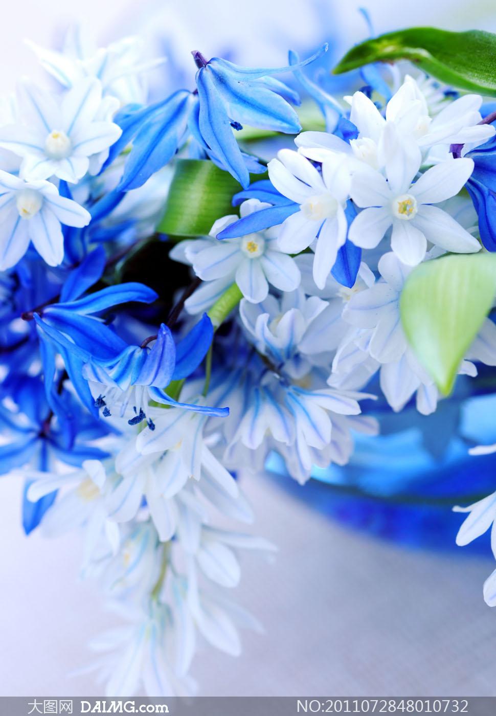 蓝色和白色花束鲜花高清摄影图片