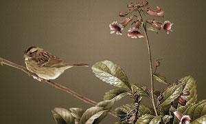 花鸟植物特写PSD分层素材