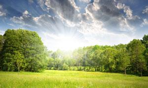 郊外草地树林自然风景高清摄影图片