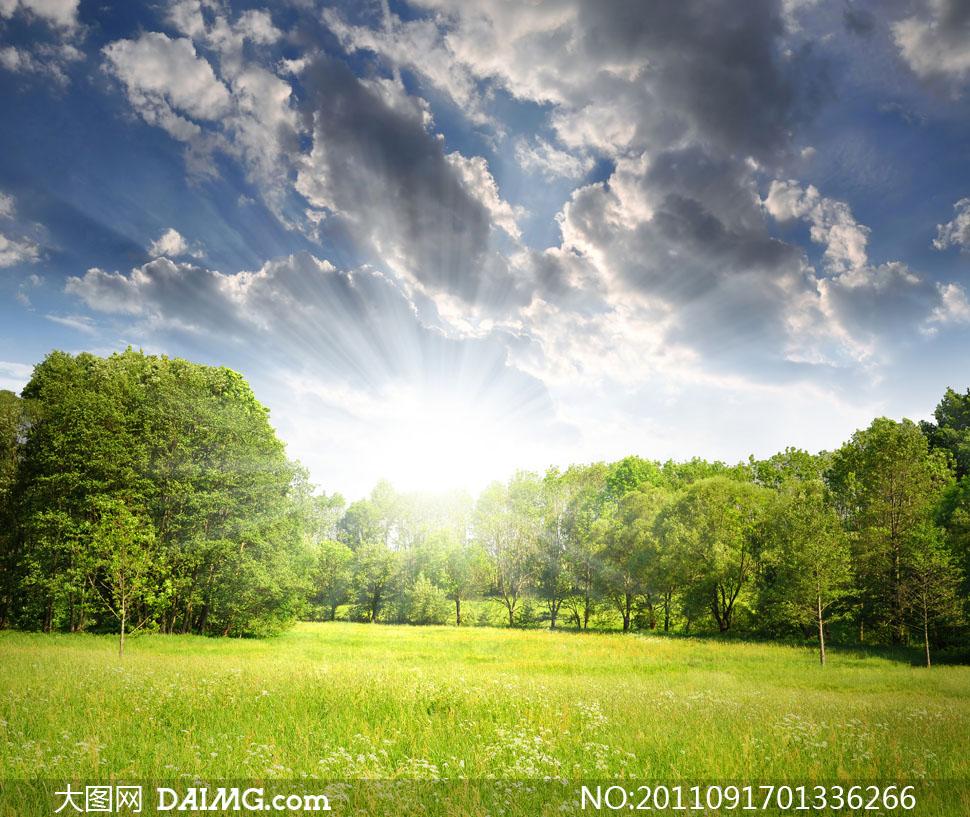 郊外草地树林自然风景高清摄影图片 - 大图网设计素材图片