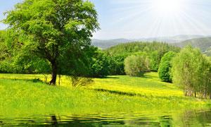 郊外草地与河边树木风光高清摄影图片
