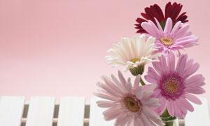鲜花插花静物特写高清摄影图片