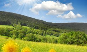 蓝天白云山林草地自然风光高清摄影图片