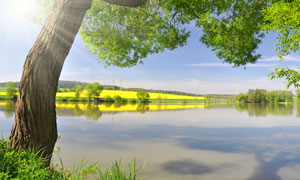 河边的大树与田园风光摄影高清图片