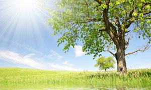 蓝天白云阳光与河边的大树高清摄影图片