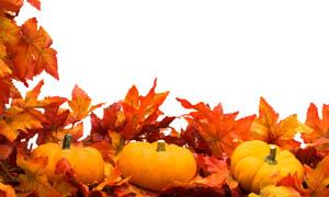 秋天枫叶和南瓜图片素材