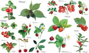 带着枝叶的新鲜水果图片