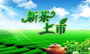 茶园新茶上市海报PSD源文件