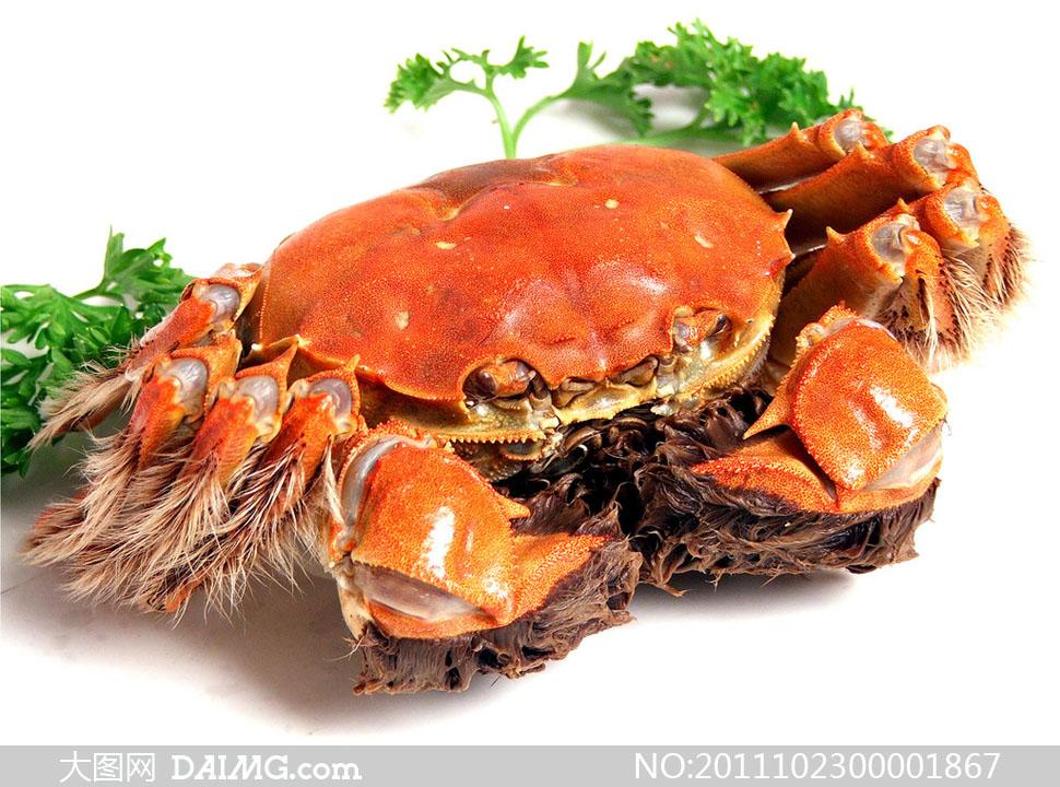大闸蟹螃蟹海洋生物河蟹海鲜菜式毛蟹传统美食餐饮美食超市食品摄影