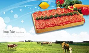 田地上放牧的牛群与肉食PSD分层素材