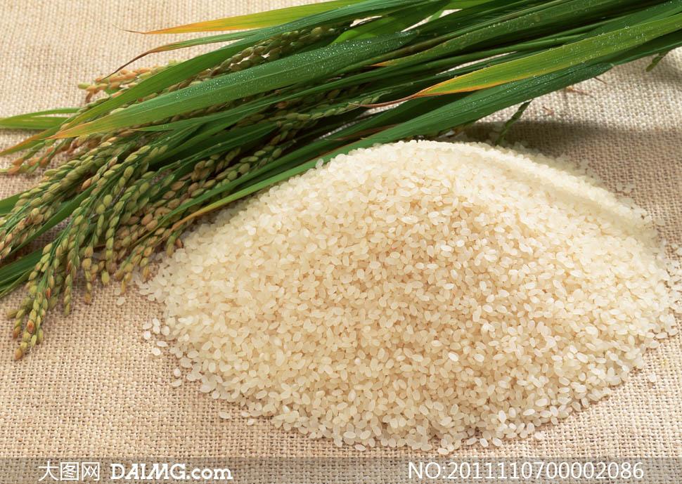 水稻食物简笔画