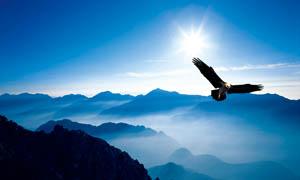 山脉间展翅飞翔的雄鹰摄影图片