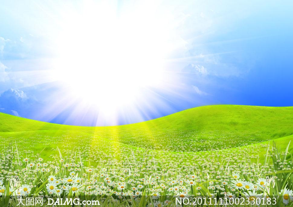 山坳里的鲜花自然风景高清摄影图片