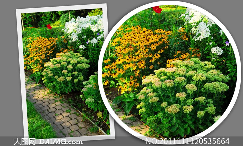 关键词: 高清大图图片素材摄影风景风光鲜花花朵花卉植物花园园林景观