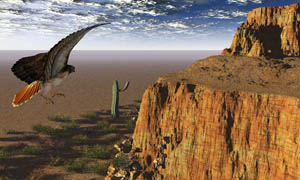 飞翔的雄鹰摄影图片素材