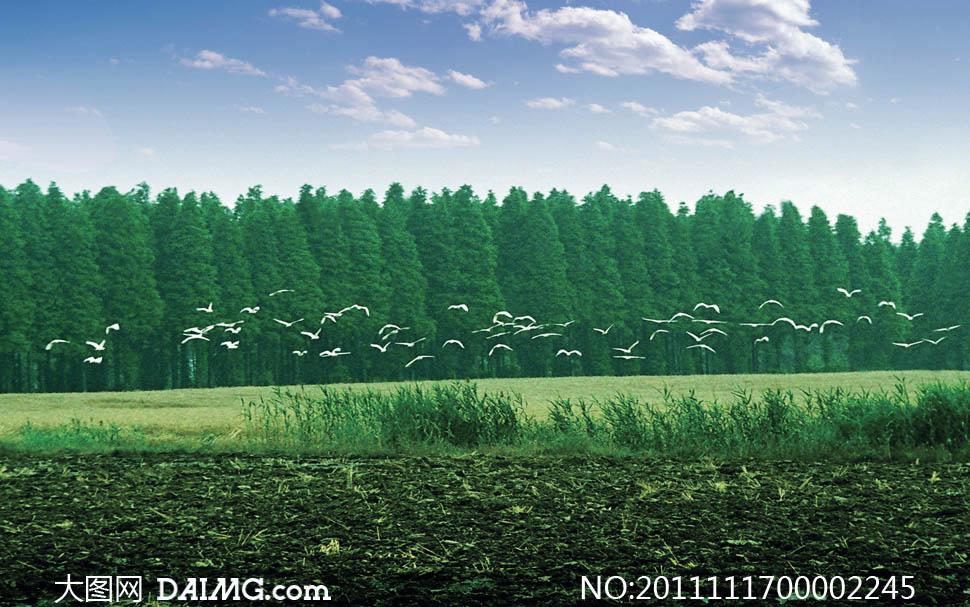 飞翔飞鸟小鸟大雁田野原野自然风景自然景观摄影高清