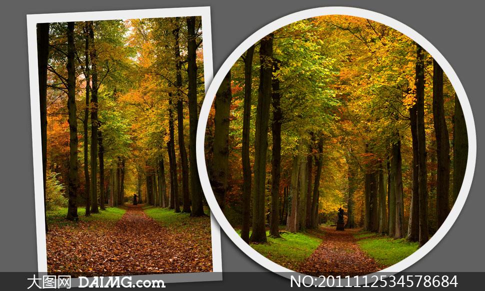 深秋落满树叶的树林风景高清摄影图片