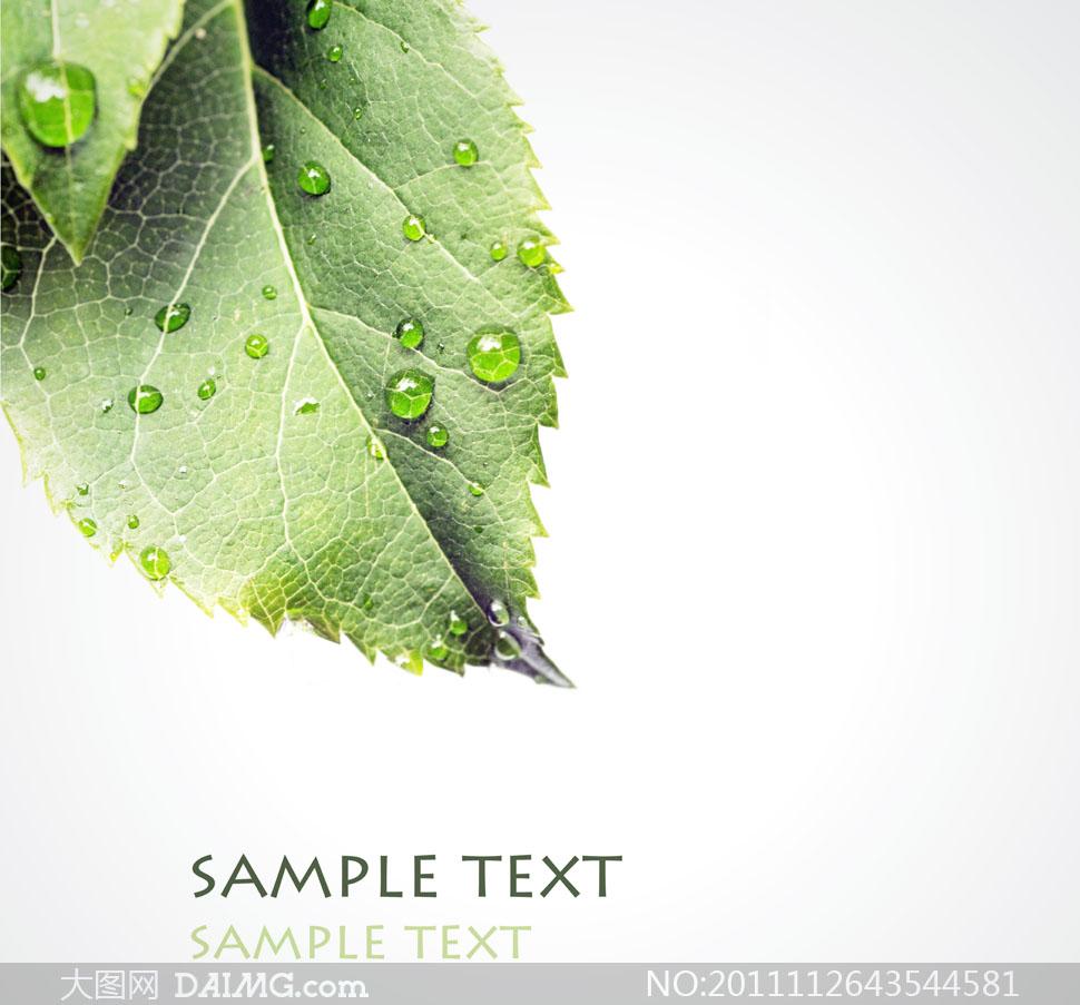 绿叶上露珠镜头特写高清图片图片
