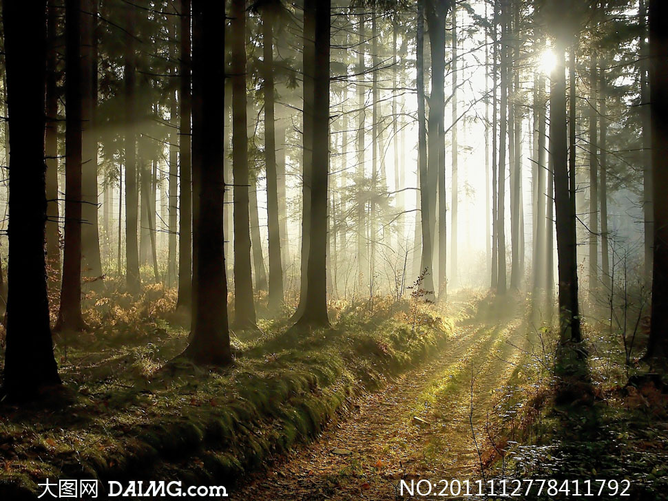 高清壁纸 风景 森林 桌面 970_728