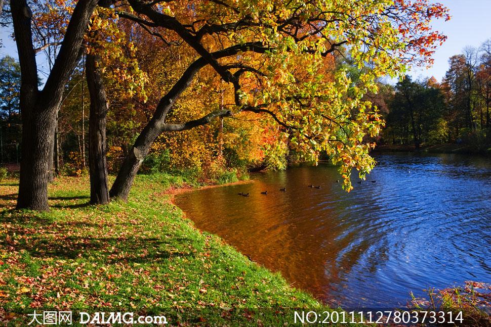 公园湖畔树林秋天自然风景高清摄影图片 - 大图网设计