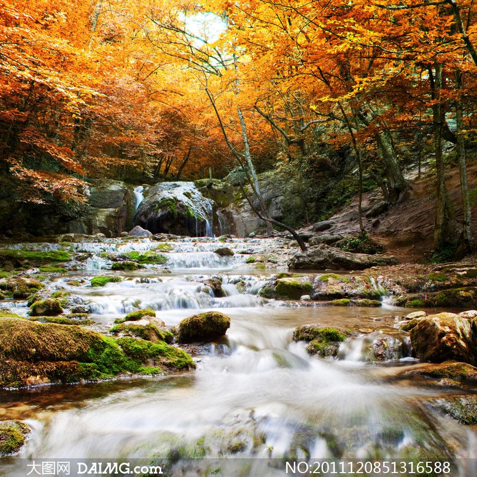 风景山林小溪溪流秋天秋季红叶黄叶树木大树山林石头山石流水水流唯美