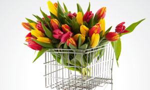 购物车上的郁金香花束高清摄影图片