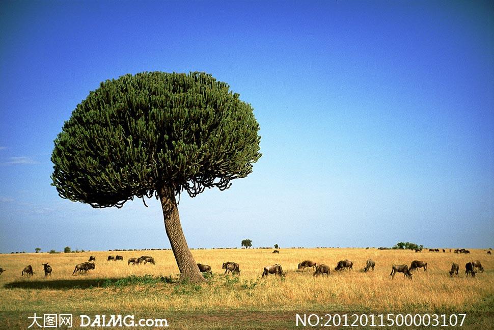 肯尼亚风光摄影图片 - 大图网设计素材下载图片