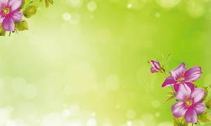 绿色清爽花朵背景设计PSD分层素材