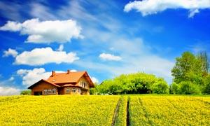 蓝天白云下的美丽田园风光摄影图片