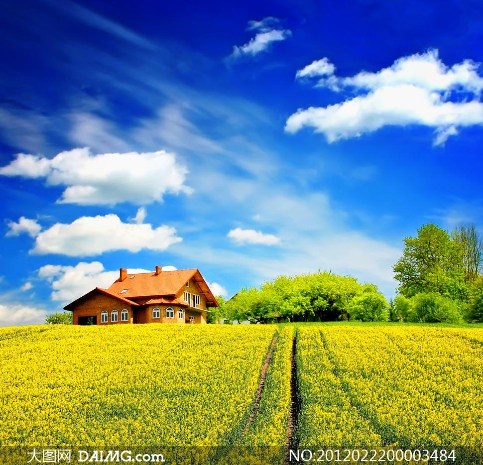 蓝天白云下的美丽田园风光摄影图片 - 大图网设