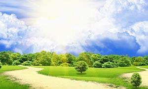 阳光下的草原和森林设计图片素材