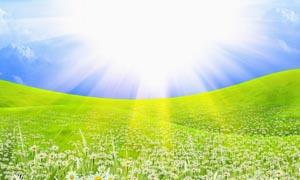 阳光下的菊花草地设计图片