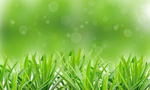绿色清新背景下的小草图片素材