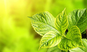 清新背景下的春季绿叶图片素材