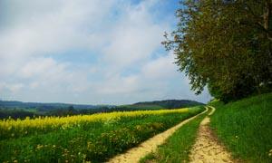 春天里的油菜花田园摄影图片