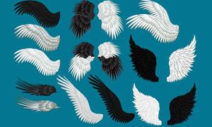 美丽的天使翅膀PSD分层素材