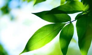春天绿色树叶镜头特写高清摄影图片