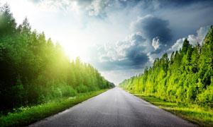 公路两旁的树木绿化风光高清摄影图片