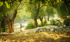 公园里的树木自然风光摄影高清图片