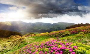 漫山遍野的春天气息高清摄影图片