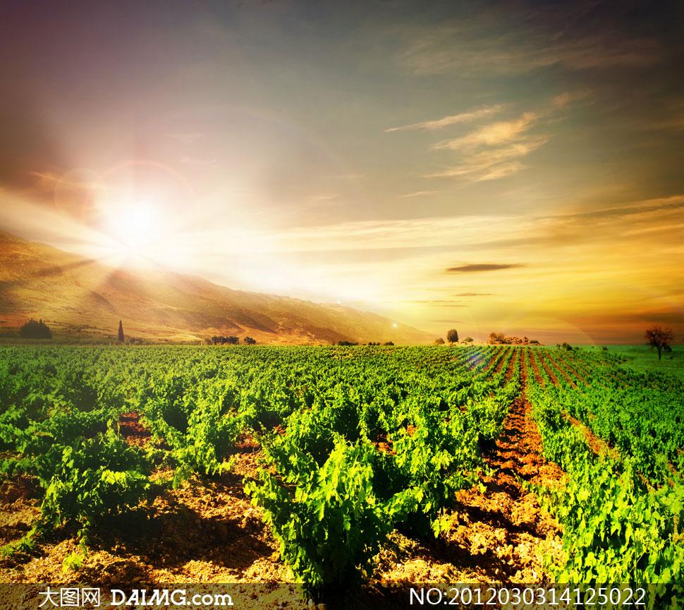 Фото виноградники
