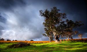 草地上的苍劲大树风光摄影高清图片